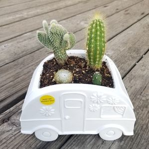 Cactus and Traile camper arrangement